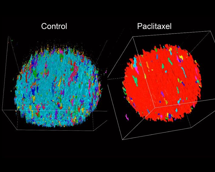 Pittsburgh Sensory Neuroscience